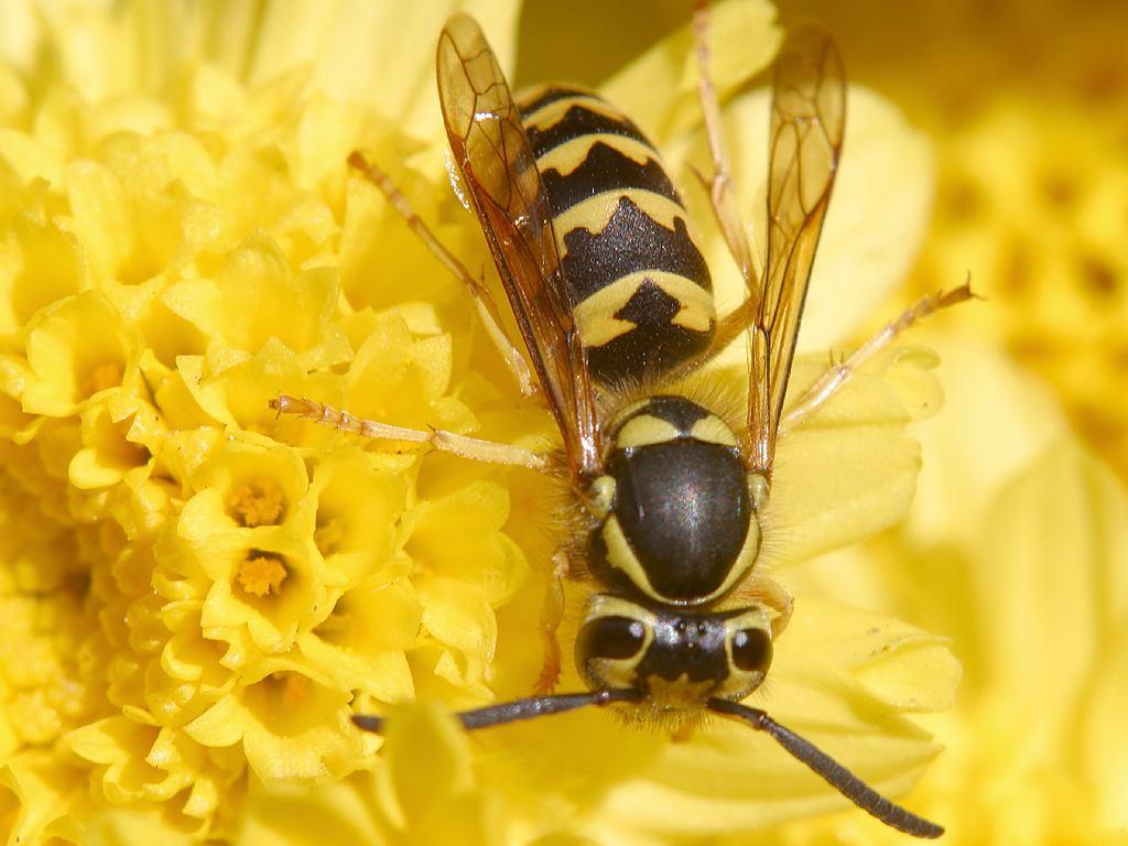 Hilfreiche Maßnahmen bei einem Bienen- oder Wespenstich